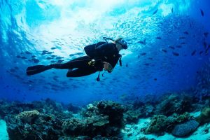 SCUBA reef diving with fish